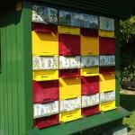 Olimja Bienenzucht Copyright Conti-Reisen