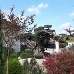 pessac-chateau-pape-clement-park © krumpen
